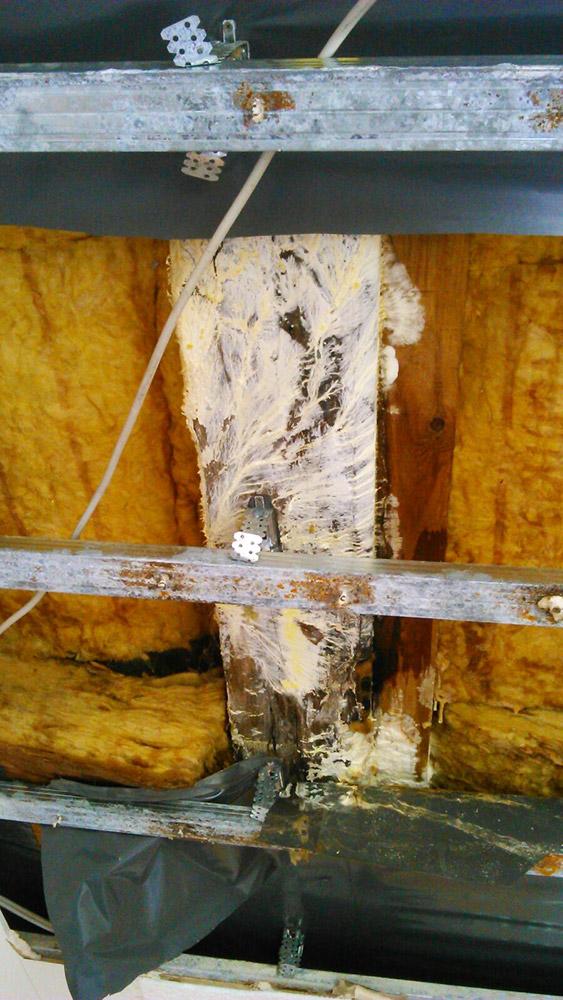 Holzschaden duch Pilzbildung auf Grund von regelmäßigen Undichtigkeiten und falschem Aufbau